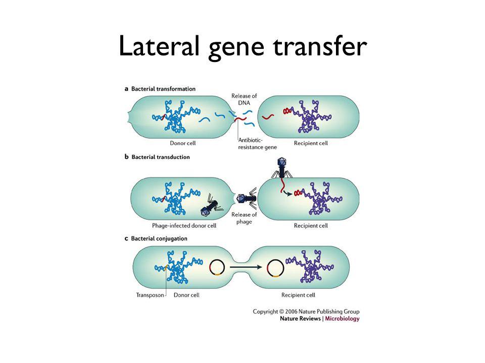 Lateral gene transfer