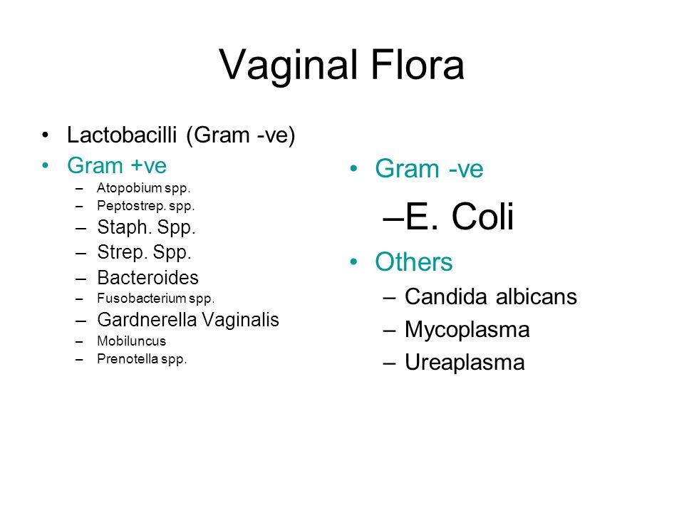 Vaginal Flora Lactobacilli (Gram -ve) Gram +ve –Atopobium spp.