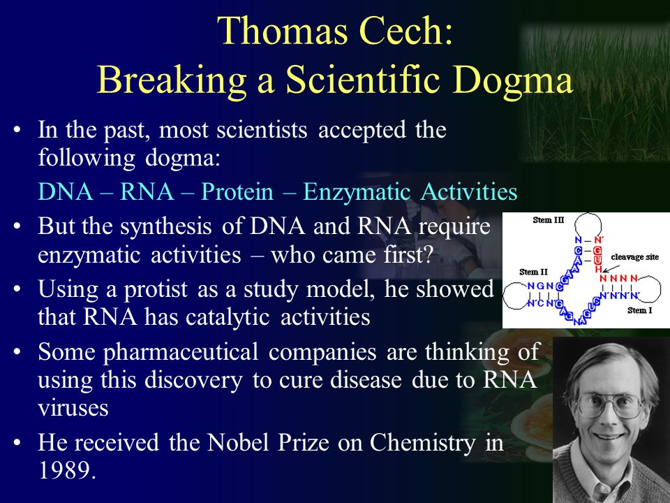 Thomas Cech: Breaking a Scientific Dogma In the past, most scientists accepted the following dogma: DNA – RNA – Protein – Enzymatic Activities But the synthesis of DNA and RNA require enzymatic activities – who came first.