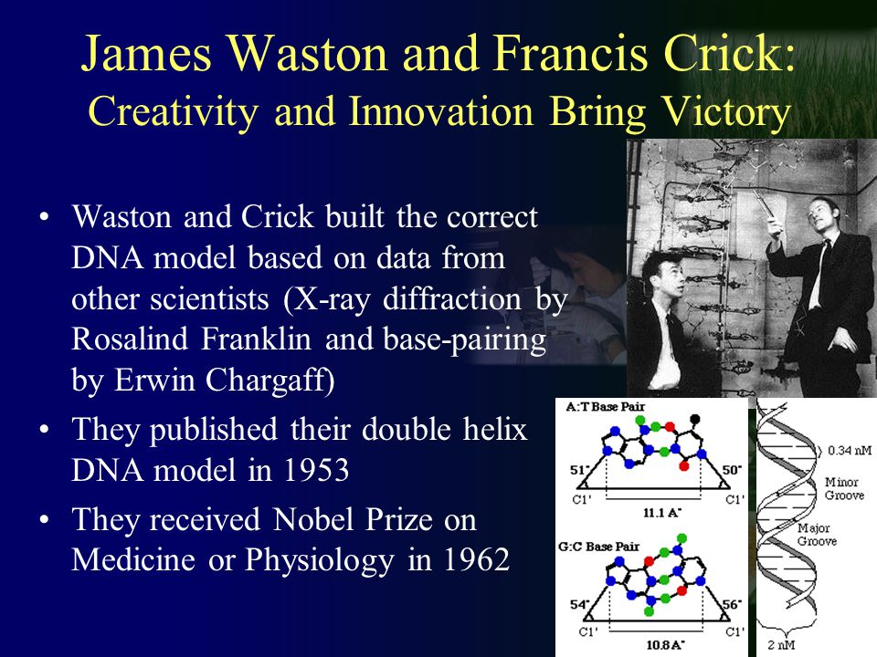 James Waston and Francis Crick: Creativity and Innovation Bring Victory Waston and Crick built the correct DNA model based on data from other scientists (X-ray diffraction by Rosalind Franklin and base-pairing by Erwin Chargaff) They published their double helix DNA model in 1953 They received Nobel Prize on Medicine or Physiology in 1962