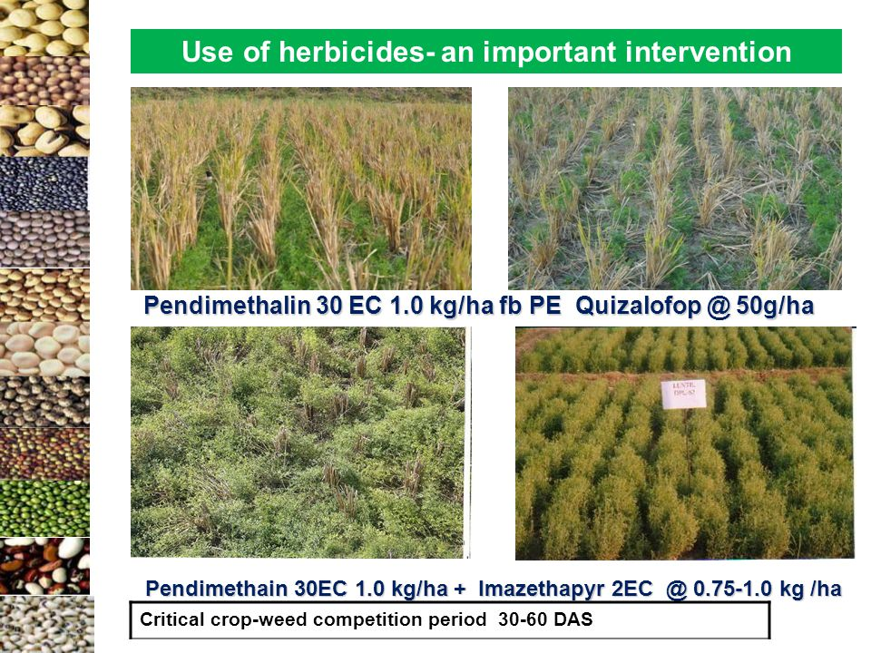 Pendimethalin 30 EC 1.0 kg/ha fb PE Quizalofop @ 50g/ha Use of herbicides- an important intervention Pendimethain 30EC 1.0 kg/ha + Imazethapyr 2EC @ 0