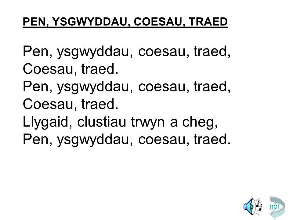 PEN, YSGWYDDAU, COESAU, TRAED Pen, ysgwyddau, coesau, traed, Coesau, traed.