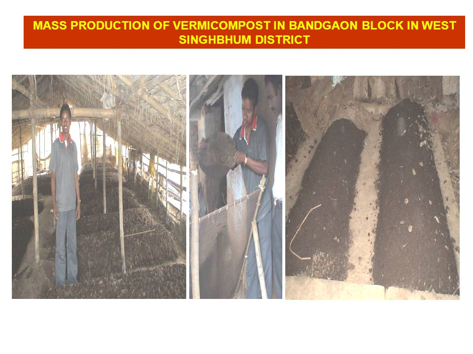 MASS PRODUCTION OF VERMICOMPOST IN BANDGAON BLOCK IN WEST SINGHBHUM DISTRICT