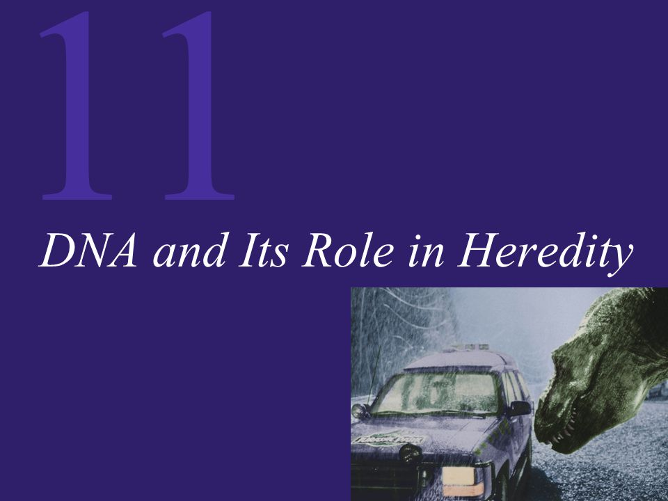 11 DNA and Its Role in Heredity