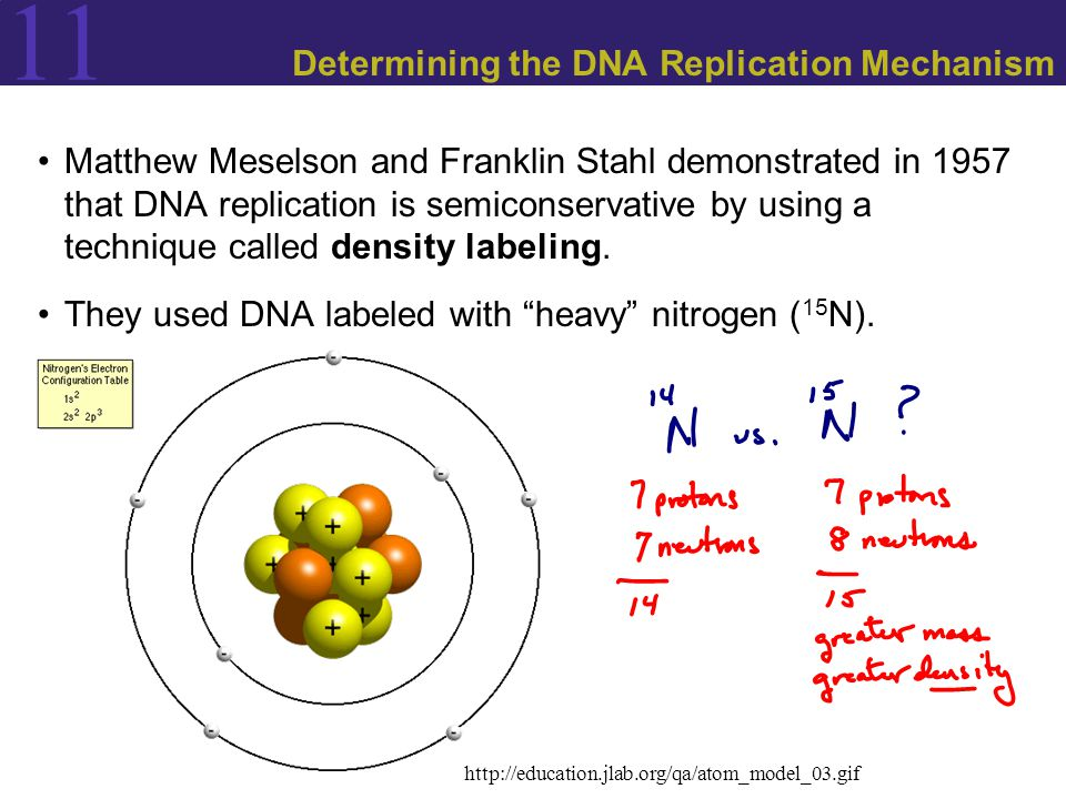 11 Determining the DNA Replication Mechanism Matthew Meselson and Franklin Stahl demonstrated in 1957 that DNA replication is semiconservative by using a technique called density labeling.