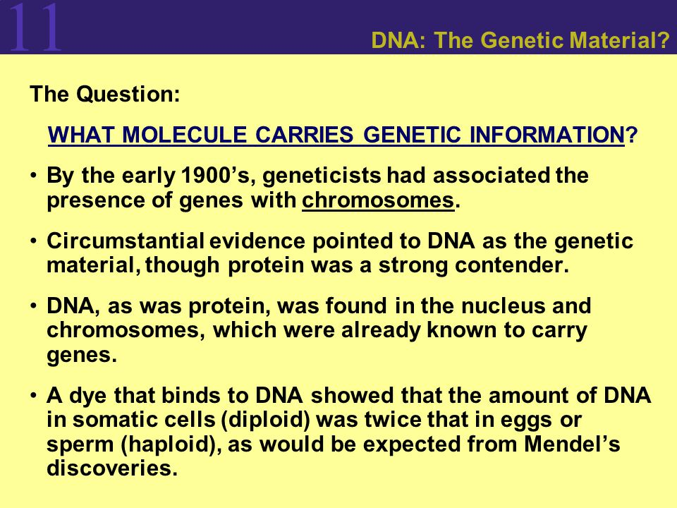 11 DNA: The Genetic Material. The Question: WHAT MOLECULE CARRIES GENETIC INFORMATION.