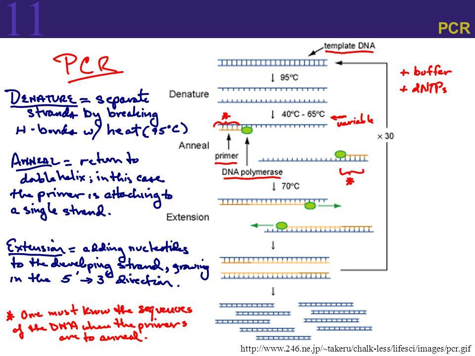 11 PCR http://www.246.ne.jp/~takeru/chalk-less/lifesci/images/pcr.gif