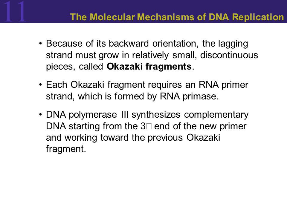 11 The Molecular Mechanisms of DNA Replication Because of its backward orientation, the lagging strand must grow in relatively small, discontinuous pieces, called Okazaki fragments.