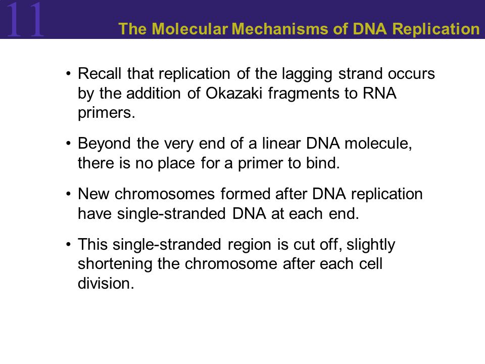11 The Molecular Mechanisms of DNA Replication Recall that replication of the lagging strand occurs by the addition of Okazaki fragments to RNA primers.