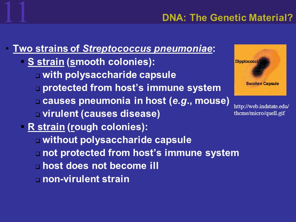 11 The Structure of DNA American geneticist James D.