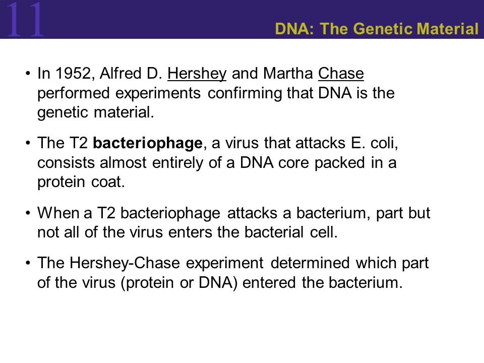 11 DNA: The Genetic Material In 1952, Alfred D.