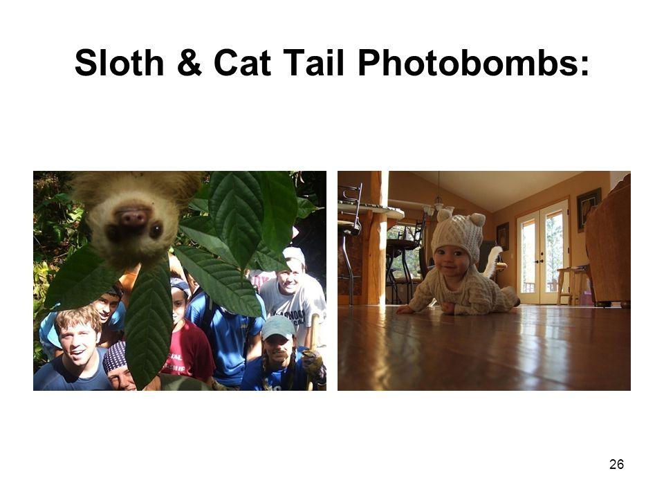 Sloth & Cat Tail Photobombs: 26