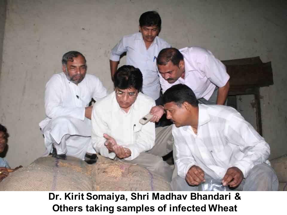 Dr. Kirit Somaiya, Shri Madhav Bhandari & Others taking samples of infected Wheat