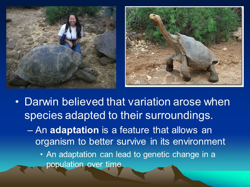 Darwin believed that variation arose when species adapted to their surroundings. –An adaptation is a feature that allows an organism to better survive