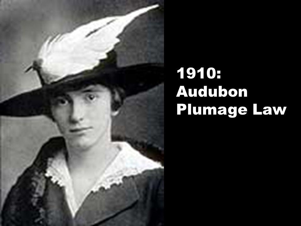 1910: Audubon Plumage Law