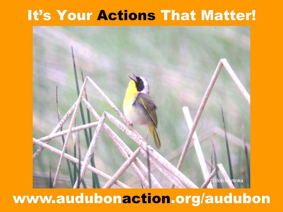 It's Your Actions That Matter! www.audubonaction.org/audubon © Bob Martinka