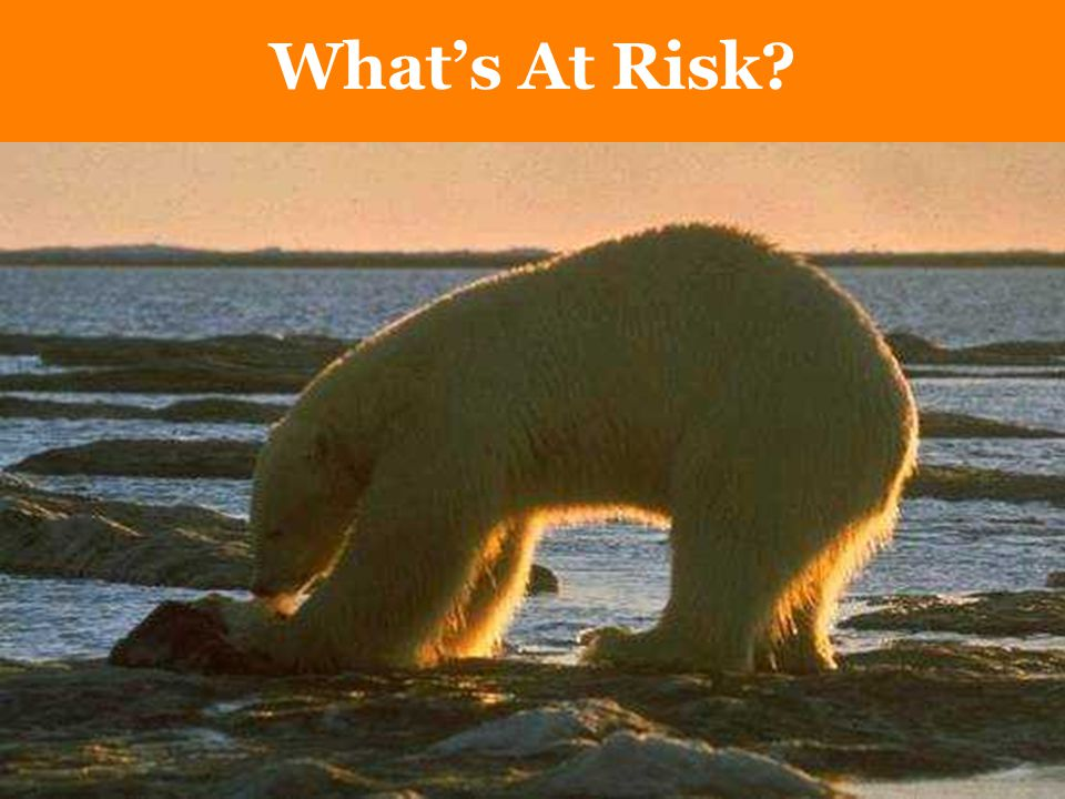 What's At Risk