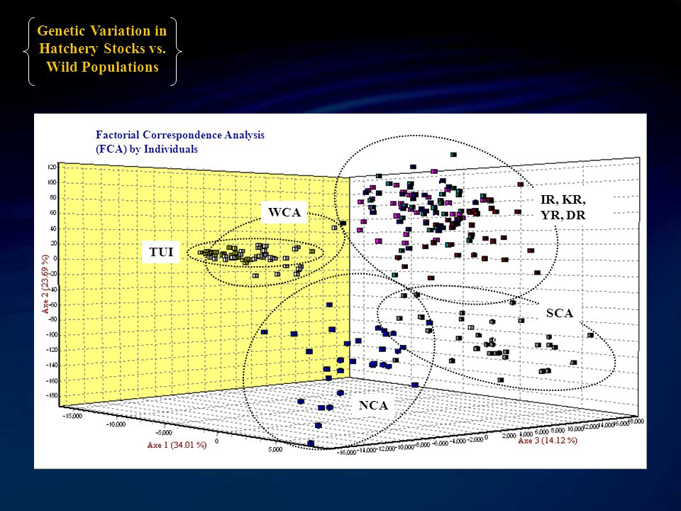 Factorial Correspondence Analysis (FCA) by Individuals c IR, KR, YR, DR TUI SCA WCA NCA Genetic Variation in Hatchery Stocks vs.