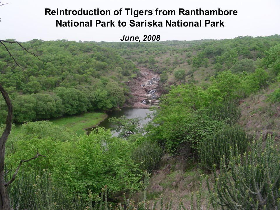 Tiger enclosure at the release site in Karnakawas beat of Sariska National Park