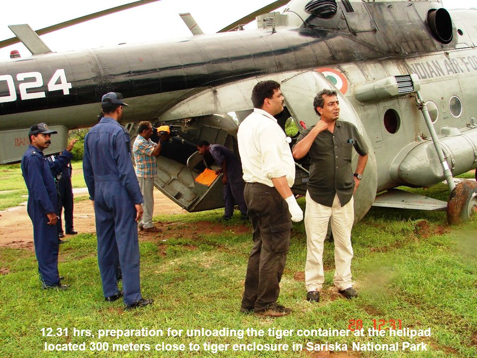 12.31 hrs, preparation for unloading the tiger container at the helipad located 300 meters close to tiger enclosure in Sariska National Park