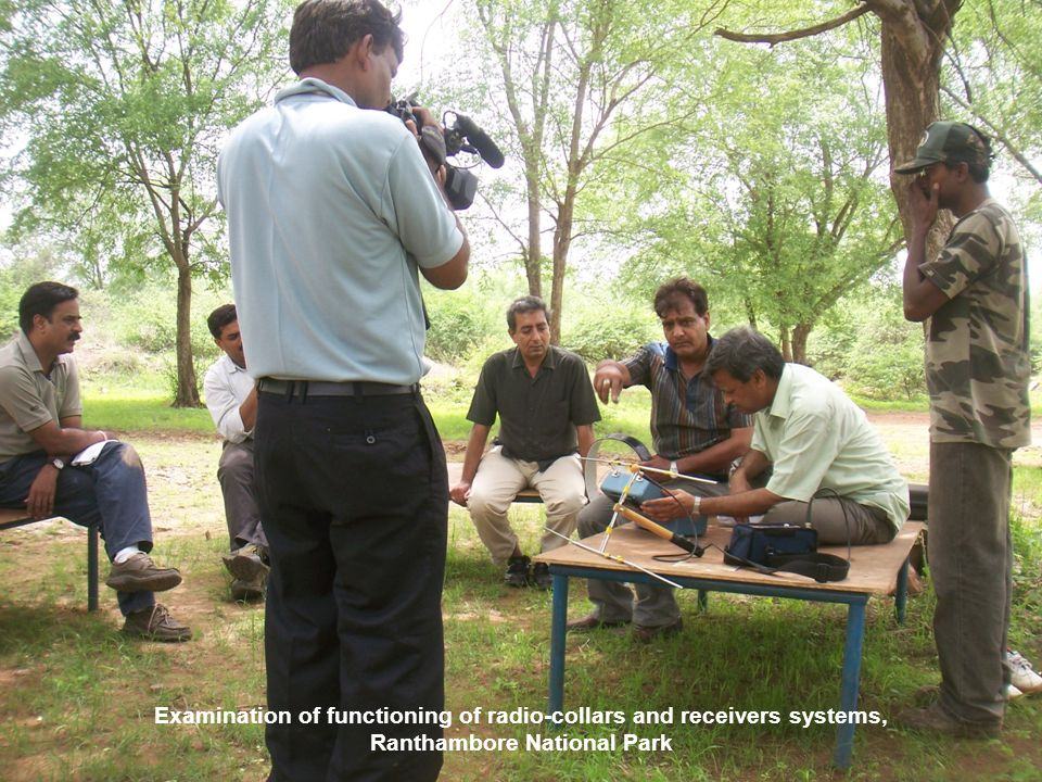 Examination of functioning of radio-collars and receivers systems, Ranthambore National Park