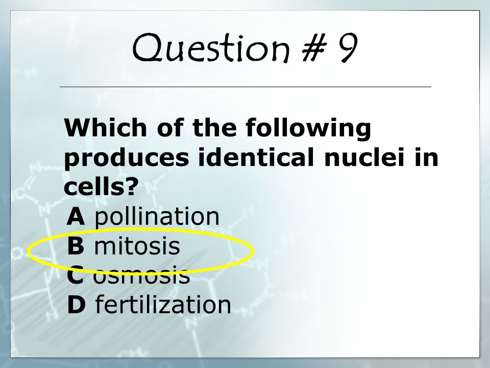 Which of the following produces identical nuclei in cells.