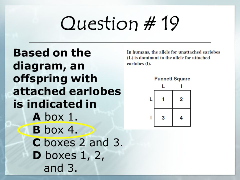 Based on the diagram, an offspring with attached earlobes is indicated in A box 1. B box 4. C boxes 2 and 3. D boxes 1, 2, and 3. Question # 19