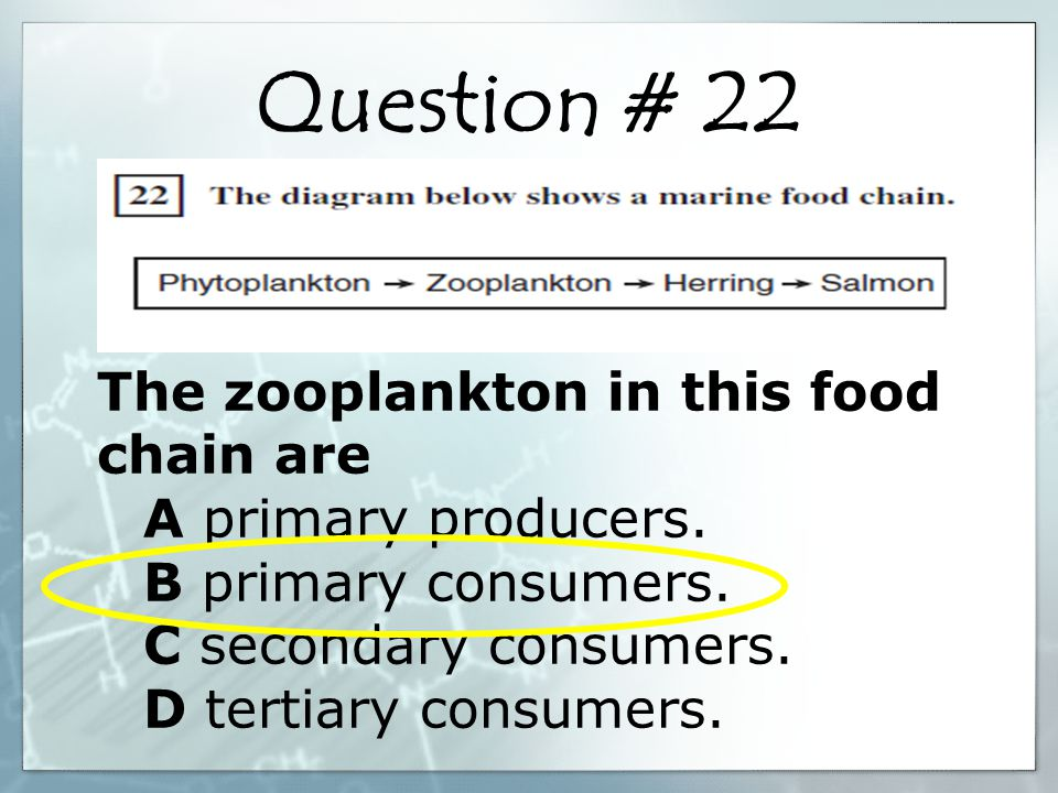 The zooplankton in this food chain are A primary producers.