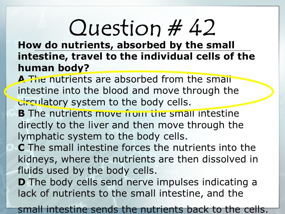 How do nutrients, absorbed by the small intestine, travel to the individual cells of the human body.
