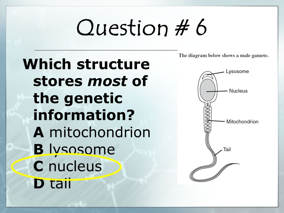 What process is necessary for the inherited traits of an organism to be passed along by sexual reproduction.