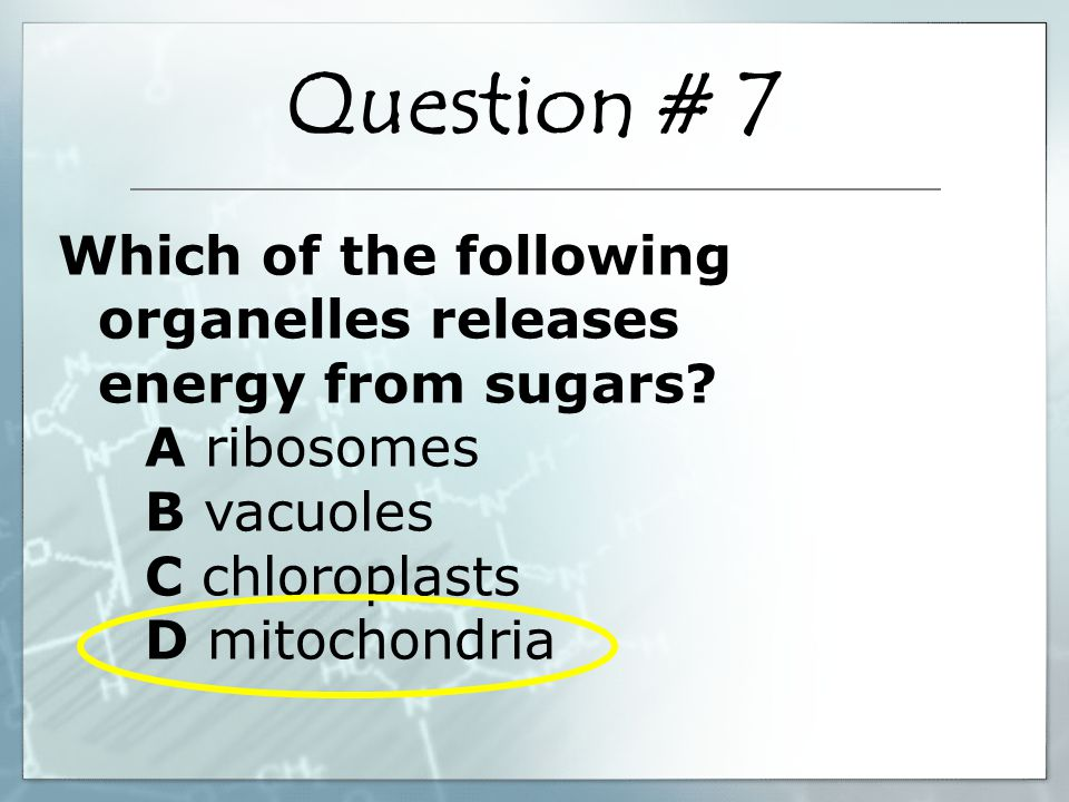 Which of the following organelles releases energy from sugars.