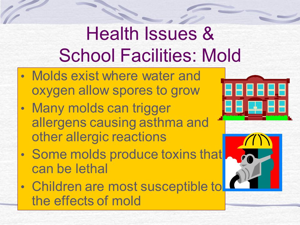 Health Issues & School Facilities: Mold Molds exist where water and oxygen allow spores to grow Many molds can trigger allergens causing asthma and ot