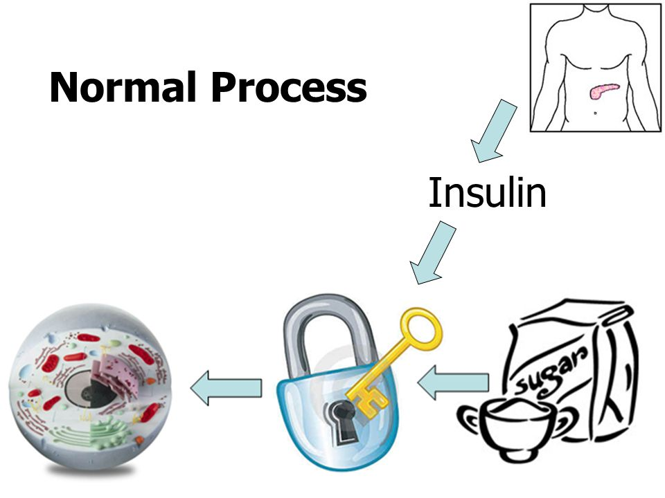 Normal Process Insulin