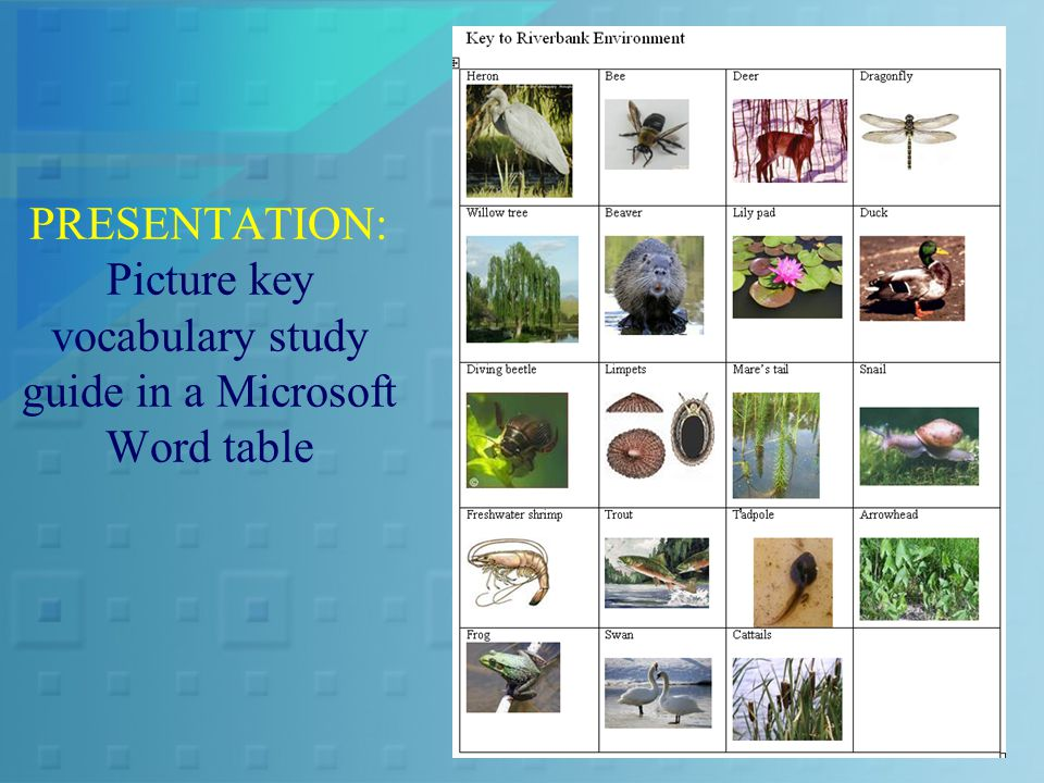PRESENTATION: Picture key vocabulary study guide in a Microsoft Word table