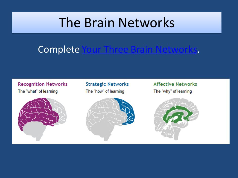 The Brain Networks Complete Your Three Brain Networks.Your Three Brain Networks