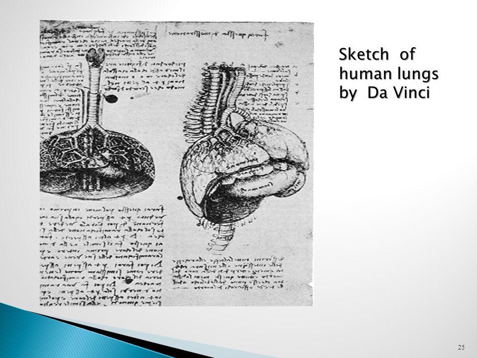 25 Sketch of human lungs by Da Vinci