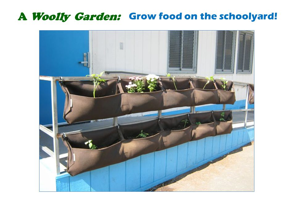 A Woolly Garden: Grow food on the schoolyard!