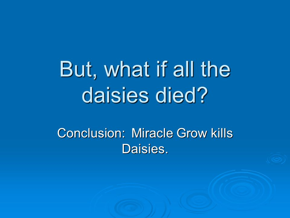 But, what if all the daisies died Conclusion: Miracle Grow kills Daisies.
