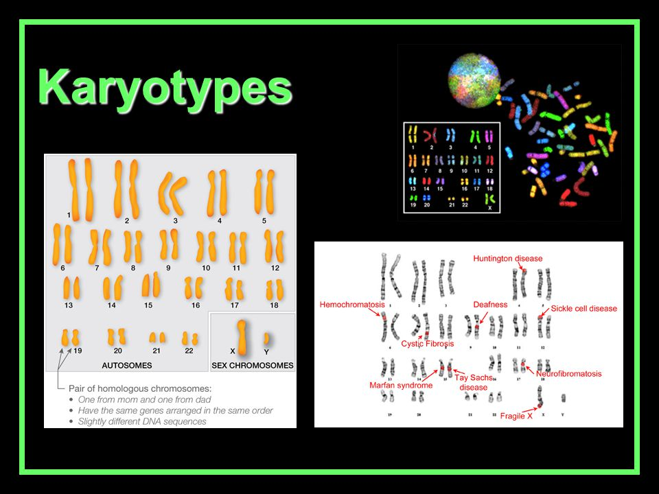 You should be able to answer the following questions by next class (based on handouts…) 1.How many chromosomes are present in a normal human karyotype.