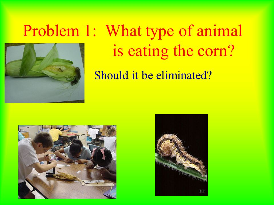 Conclusion: We need to retest and change the food every day to prevent rotting or retest using live plants.
