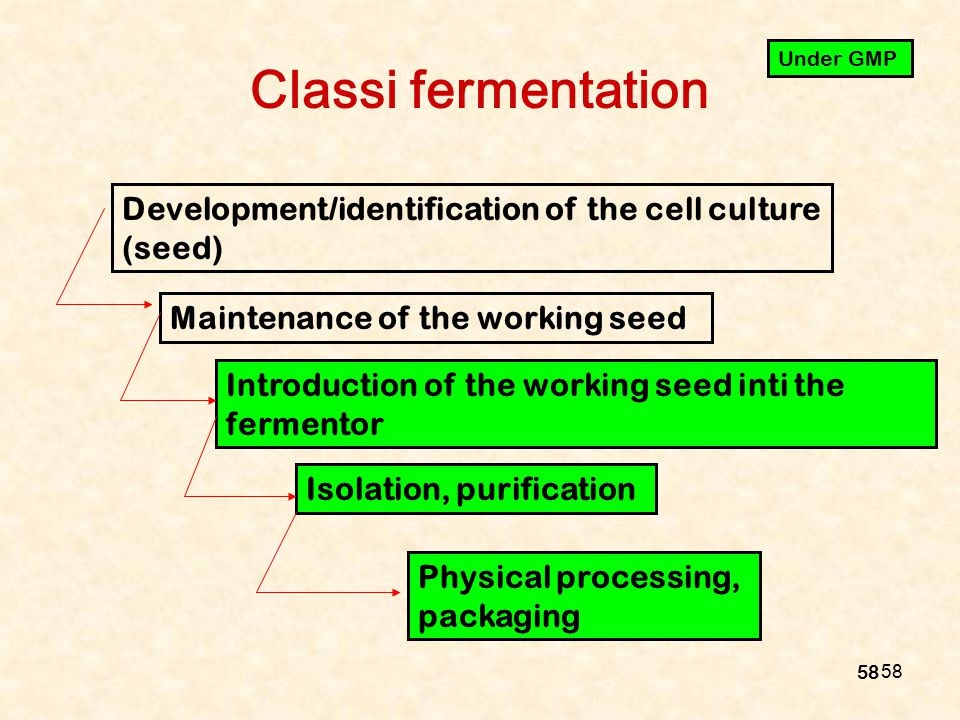 58 Classi fermentation Development/identification of the cell culture (seed) Maintenance of the working seed Introduction of the working seed inti the