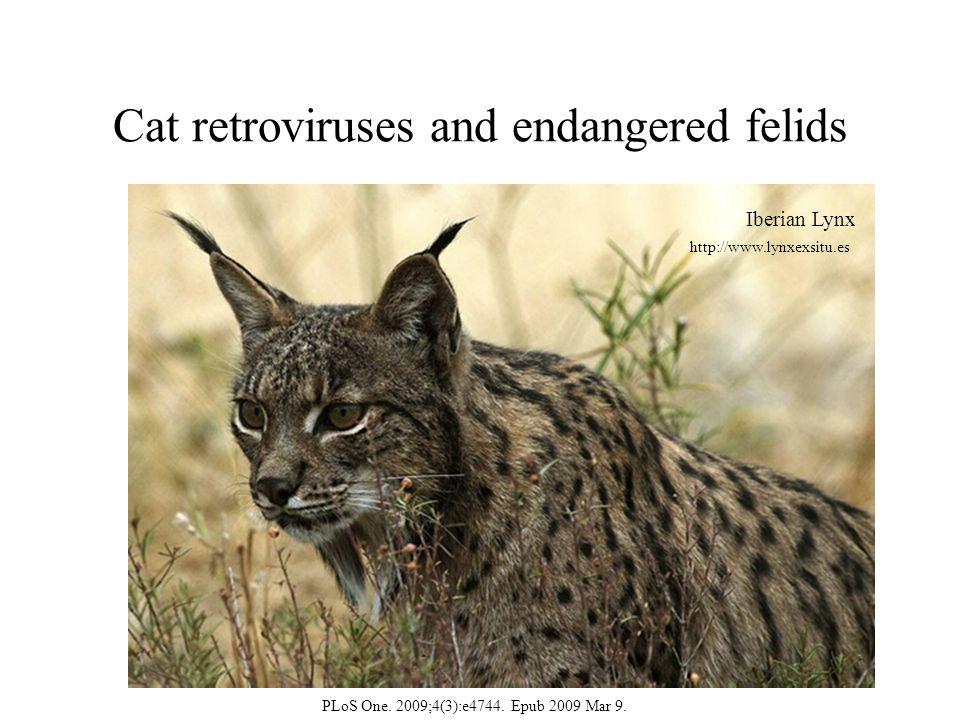 Cat retroviruses and endangered felids Iberian Lynx http://www.lynxexsitu.es PLoS One.