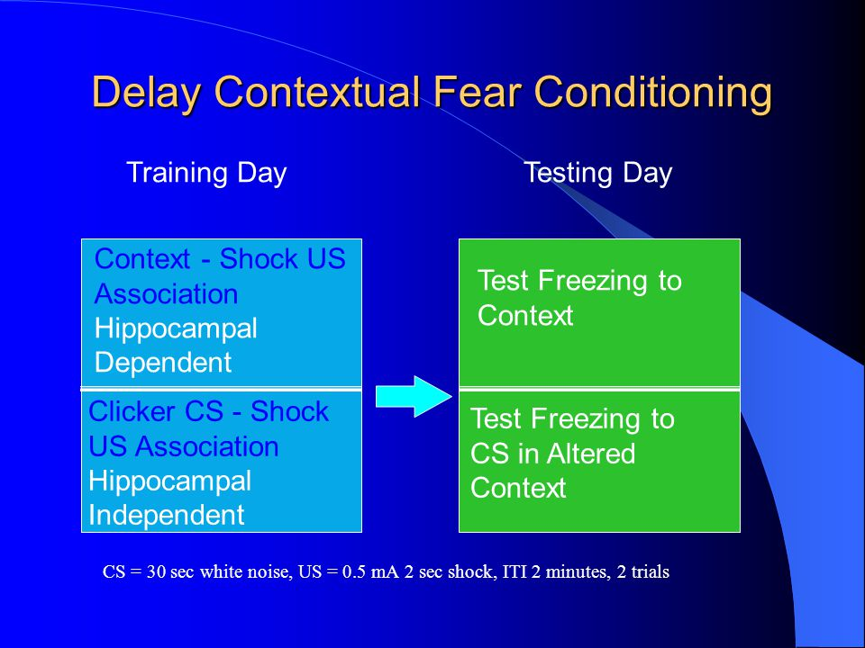 Delay Contextual Fear Conditioning Training DayTesting Day Context - Shock US Association Hippocampal Dependent Clicker CS - Shock US Association Hipp