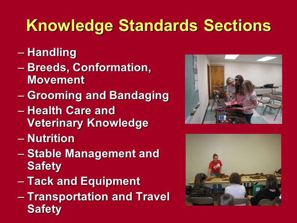 Knowledge Standards Sections –Handling –Breeds, Conformation, Movement –Grooming and Bandaging –Health Care and Veterinary Knowledge –Nutrition –Stabl