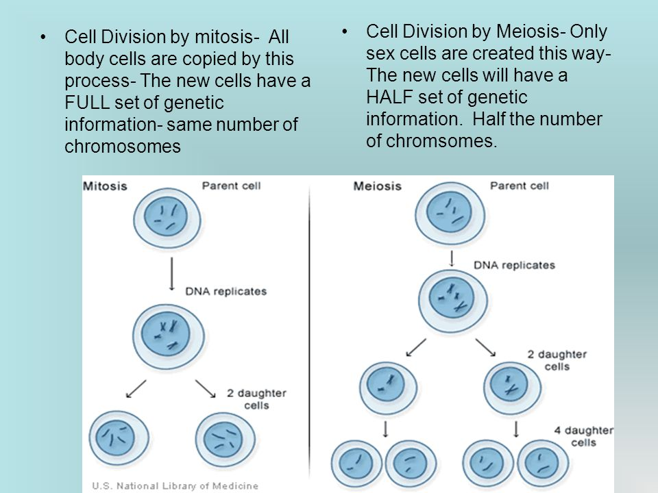 Cell Division by mitosis- All body cells are copied by this process- The new cells have a FULL set of genetic information- same number of chromosomes Cell Division by Meiosis- Only sex cells are created this way- The new cells will have a HALF set of genetic information.