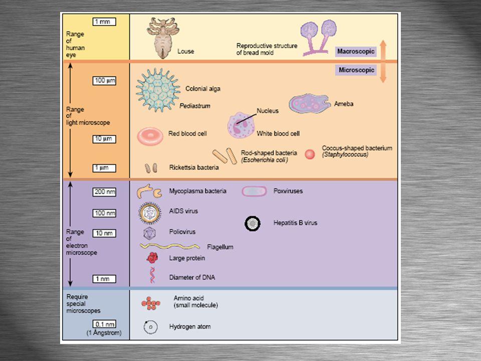 General Microbe Characteristics TINY Millimeters (mm), micrometers (µm), and nanometers (nm)