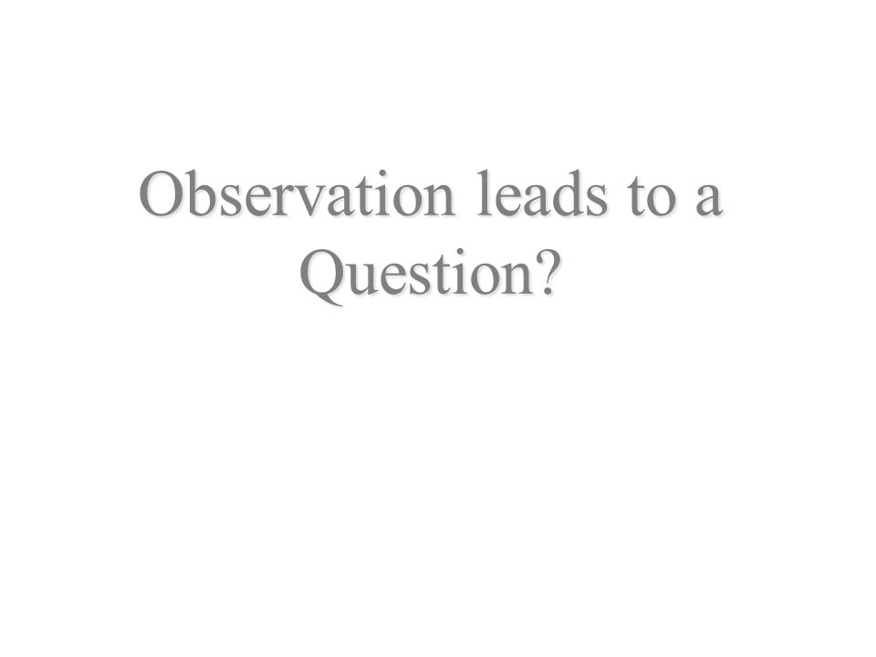 Observation leads to a Question?