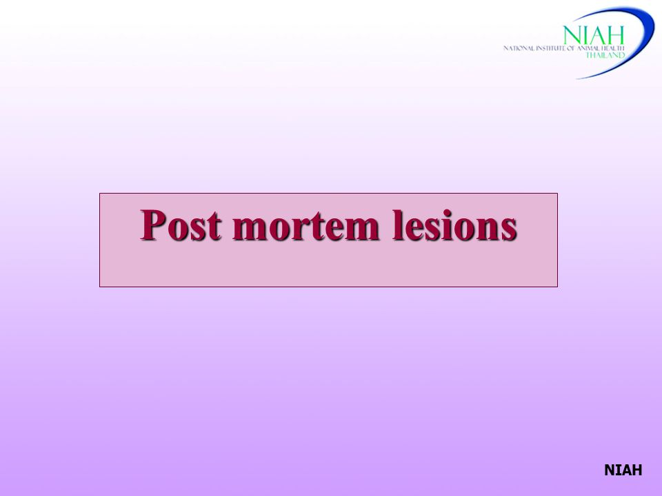 Post mortem lesions NIAH