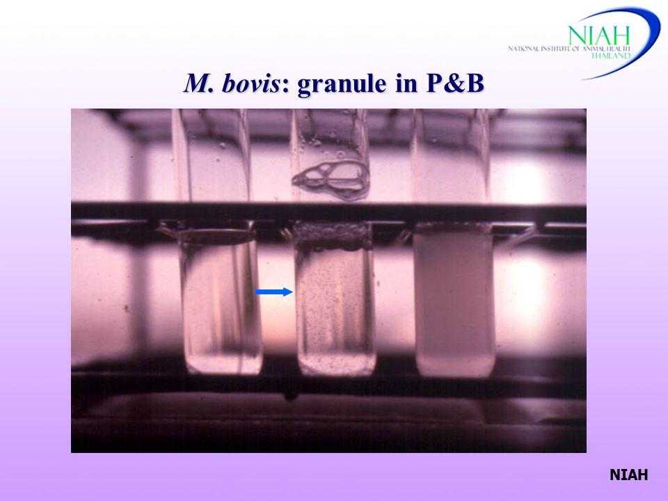 NIAH M. bovis: granule in P&B