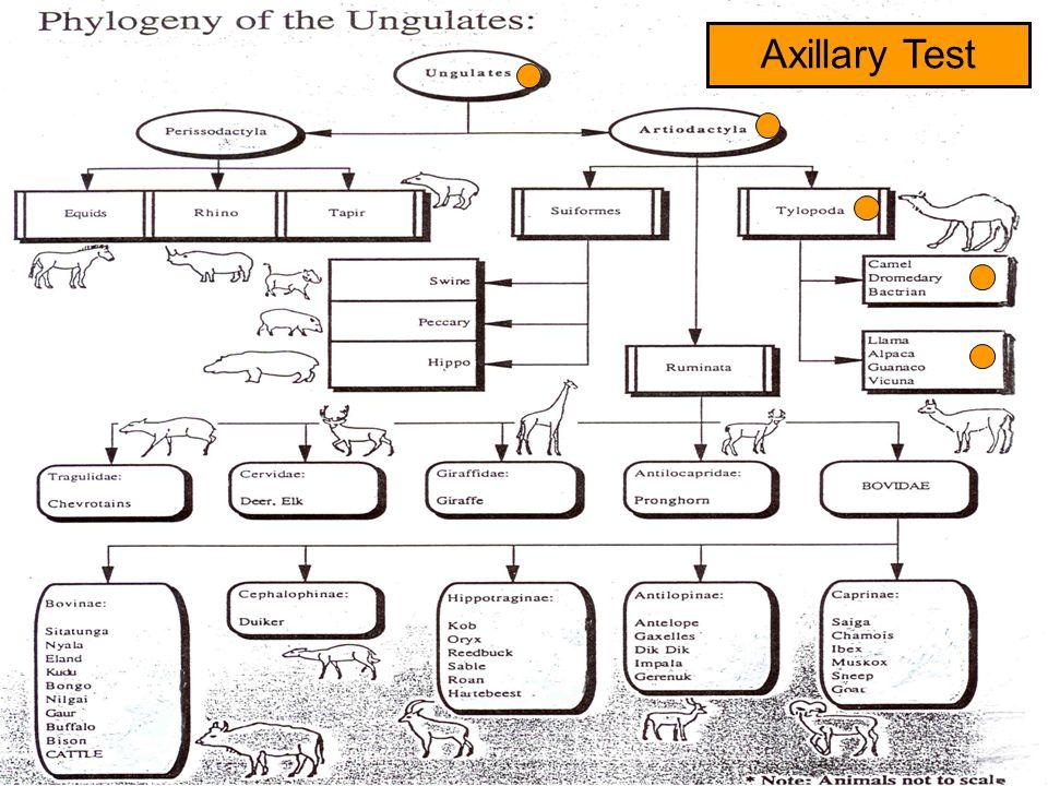Axillary Test